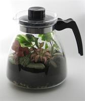 תה ביערות הגשם