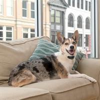 קולר נגד נביחות נטען פט סייף לכלב קטן עד בינוני