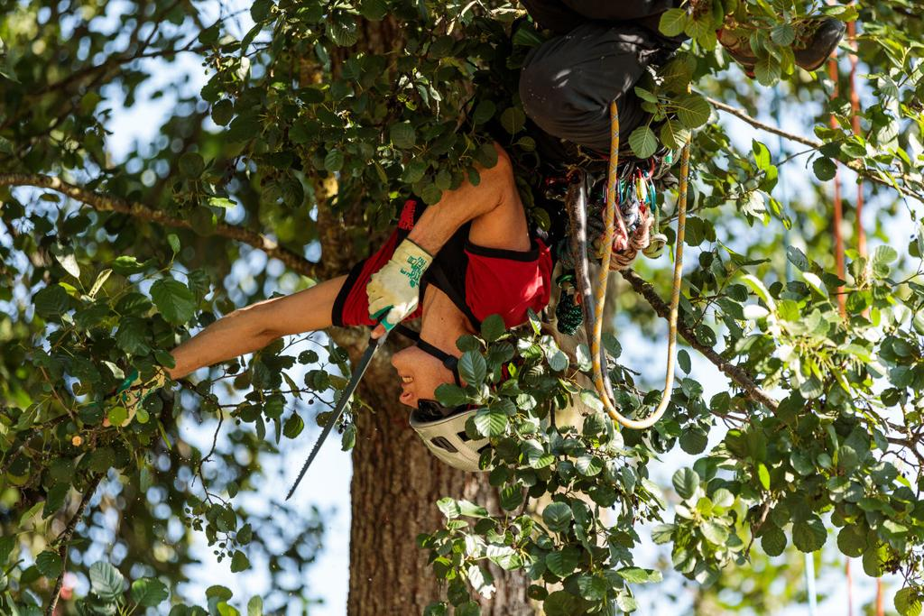 סדנת טיפוס למטפסי עצים