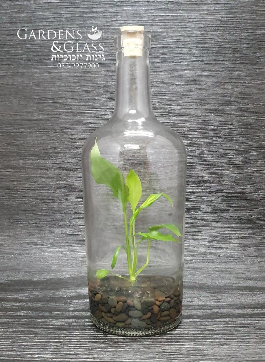 בקבוק ספטיפיליום