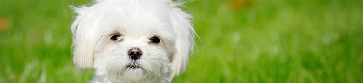 כלבים - המחסן - מוצרים לבעלי חיים