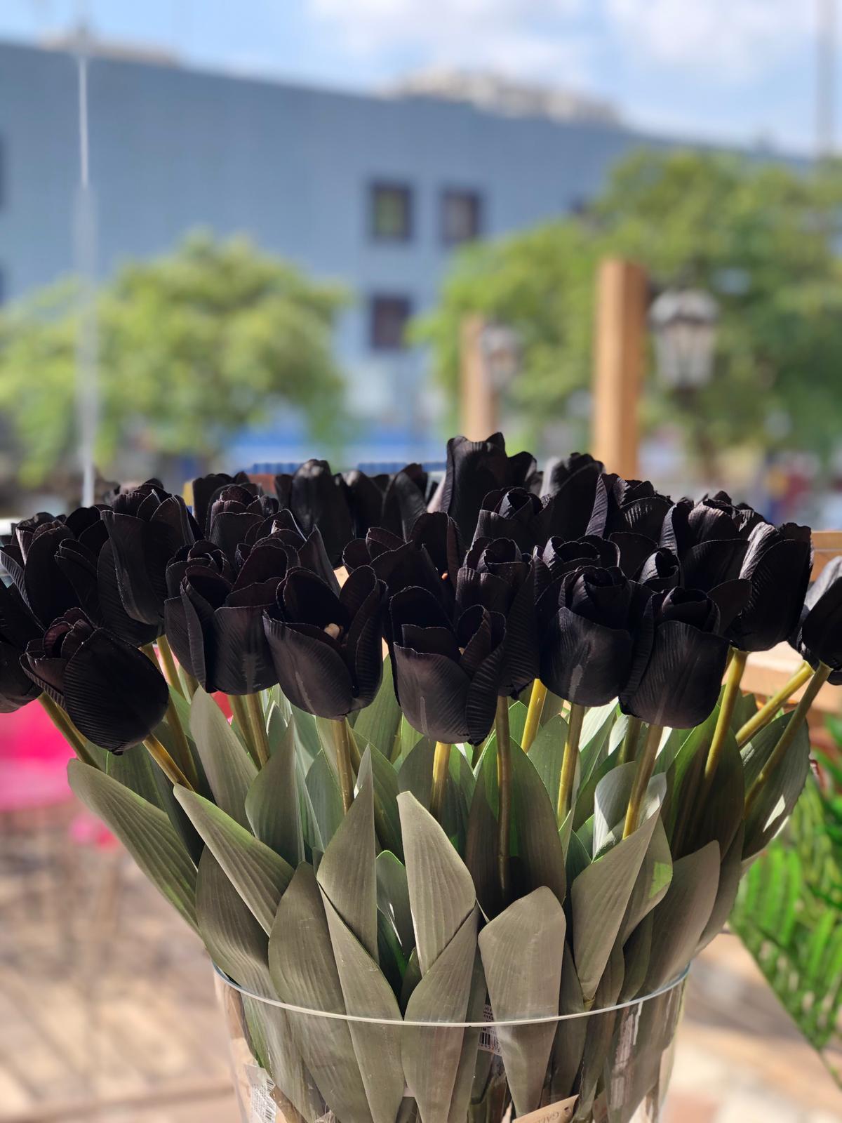טוליפ שחור