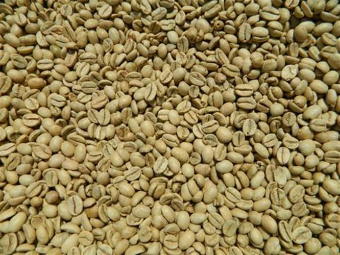 קפה ירוק הודי מונסון מלאבר - Indian Arabica Monsooned Malabar - AA