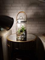 טרריום רצוע 3.5 ליטר צמחים ומוס