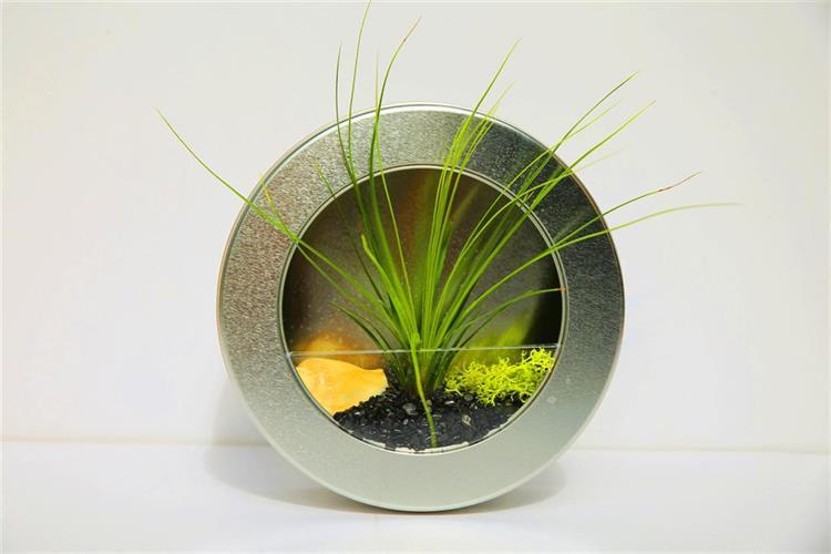 1+1 גלגל כסוף מעוצב + צמח אוויר