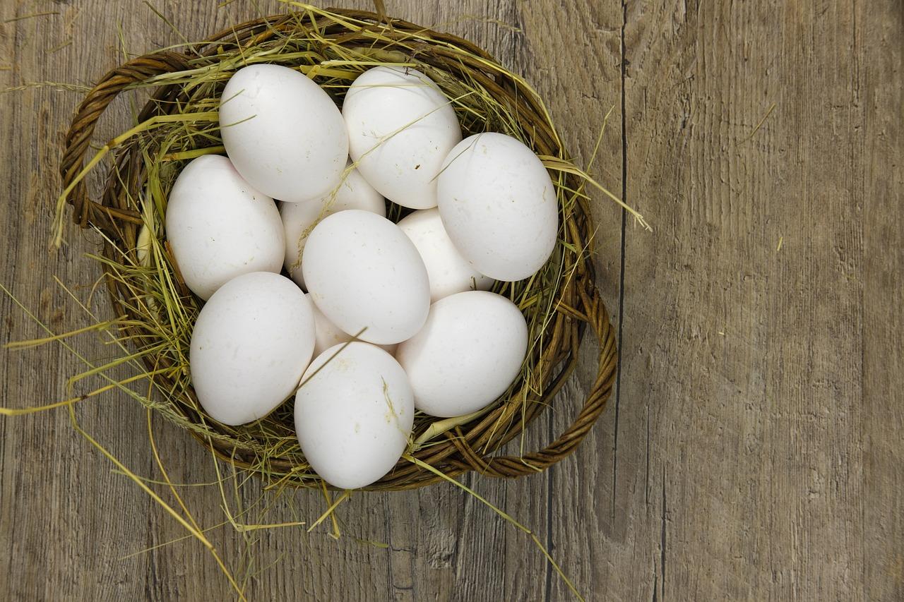 ביצי חופש אורגניות L - תבנית 12 ביצים