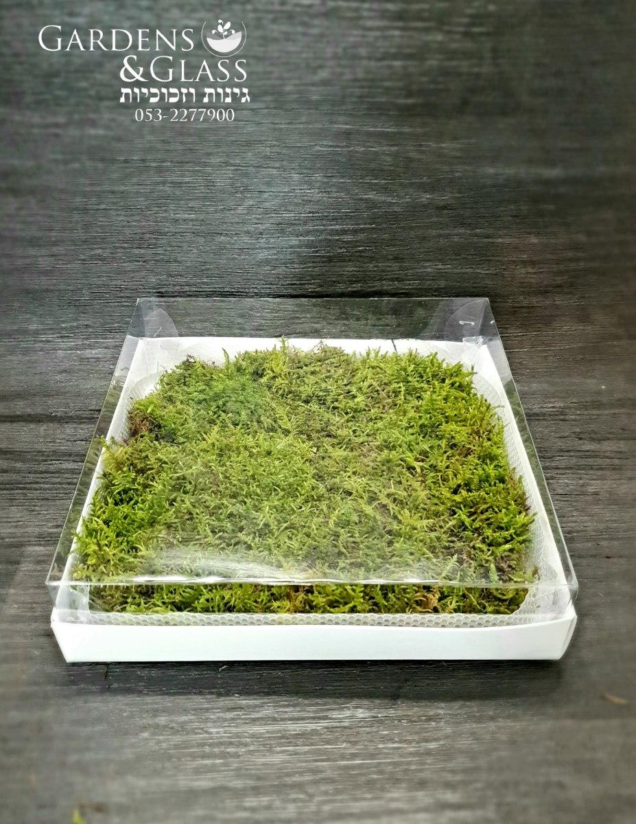 מוס דשא Fern moss 30×30