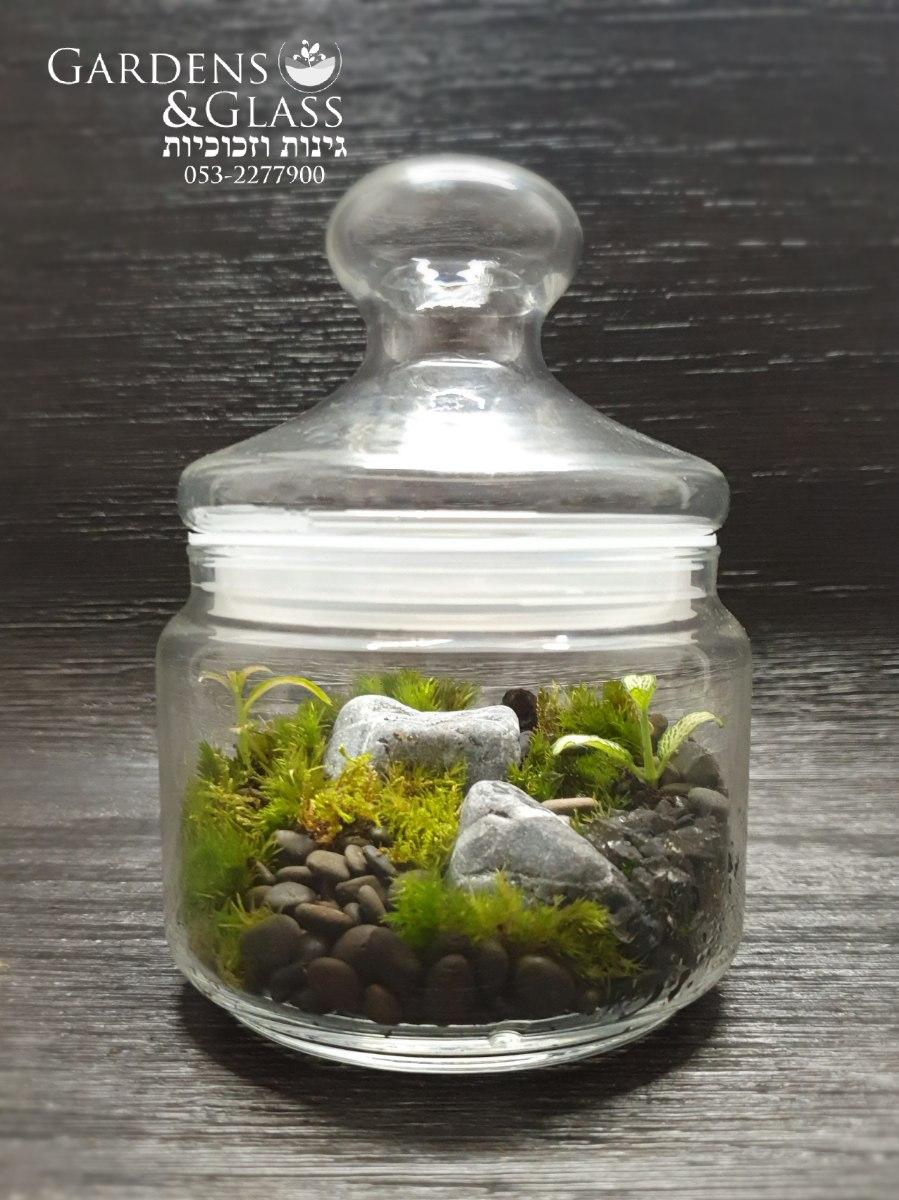 טרריום צמחים גודל 1