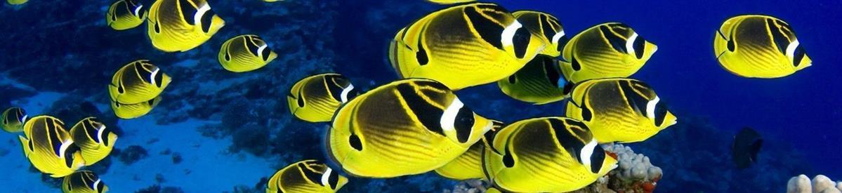 ציוד ומזון לדגים - המחסן - מוצרים לבעלי חיים