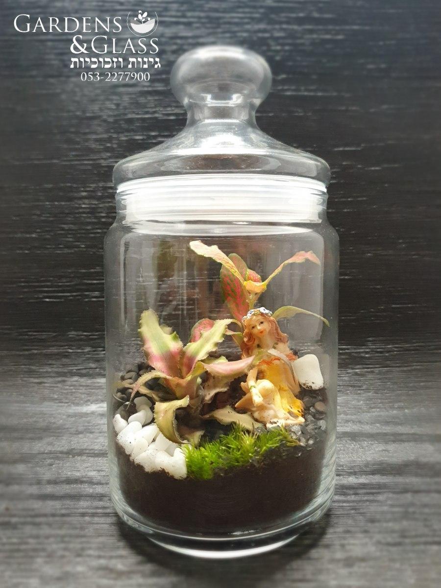 טרריום צמחים גודל 3