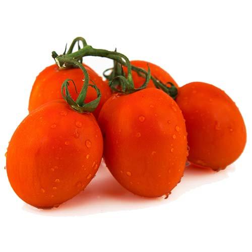 עגבניה תמר