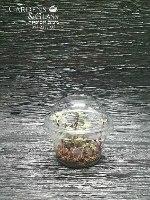 קליסיה רוזטו כוס 1