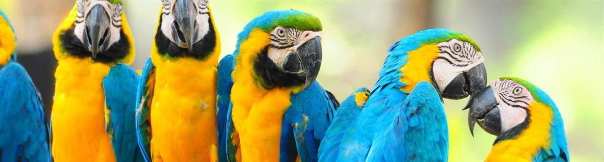 ציוד ומזון לציפורים ותוכים - המחסן - מוצרים לבעלי חיים