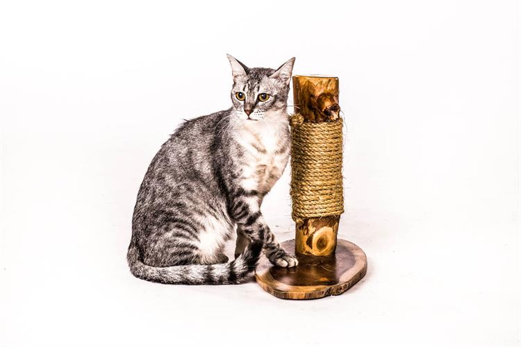 עמוד גירוד לחתול - עץ מלא