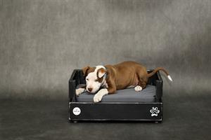 מיטה לכלב- דינגו XS - בחירת צבע