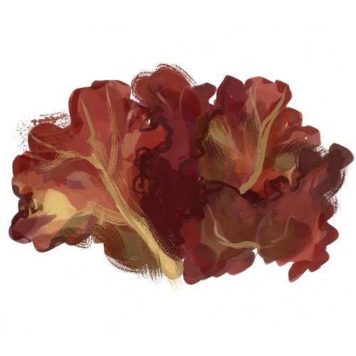 זרעי מורשת - חסה אלמוג אדום (מסולסלת)