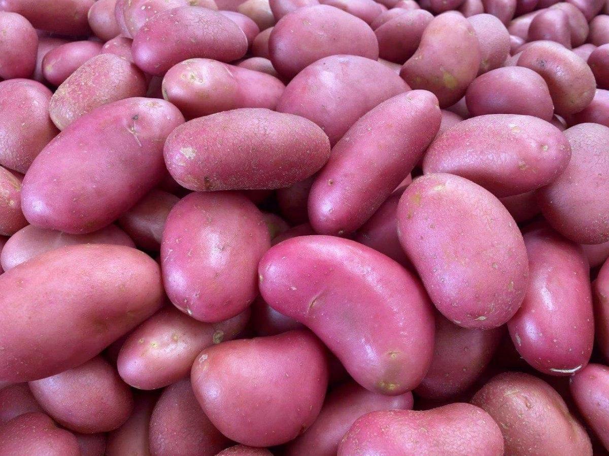 תפוח אדמה אדום גרנות (שק)