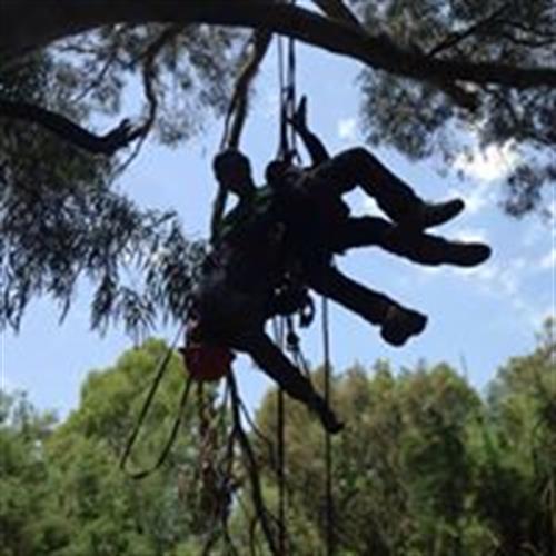"""רענון קורס """"מטפס עצים מומחה"""" - שלב א+ב+ג"""