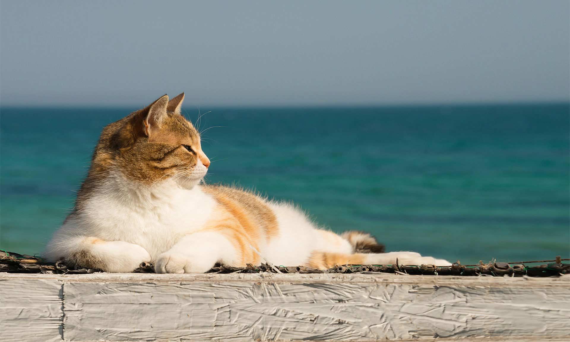 petkind cat - יוגי-בר