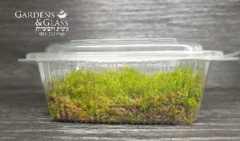 טחב מוס Fern moss