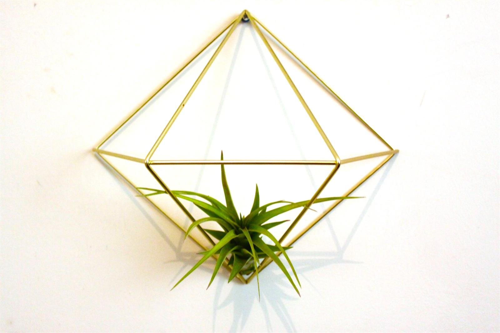 מתלה קיר גיאומטרי + צמח אוויר