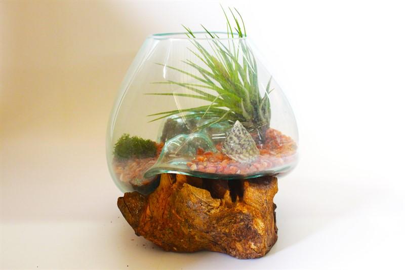 """טרריום 20 ס""""מ על גזע עץ עם צמח אוויר"""