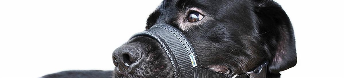 מחסומים לכלבים - המחסן - מוצרים לבעלי חיים