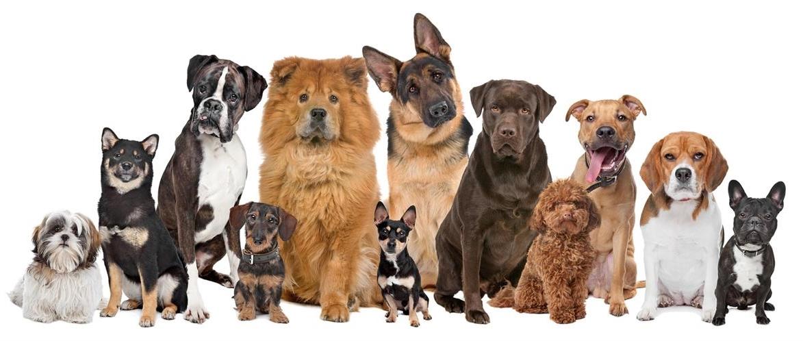כלבים - שפע לחי - מוצרי איכות ופינוק לבעלי חיים