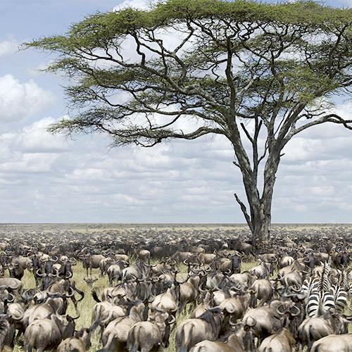 טנזניה - סיפורים מהסרנגטי | יום ד׳, 06.06.18 | מרצה: שלמה כרמל