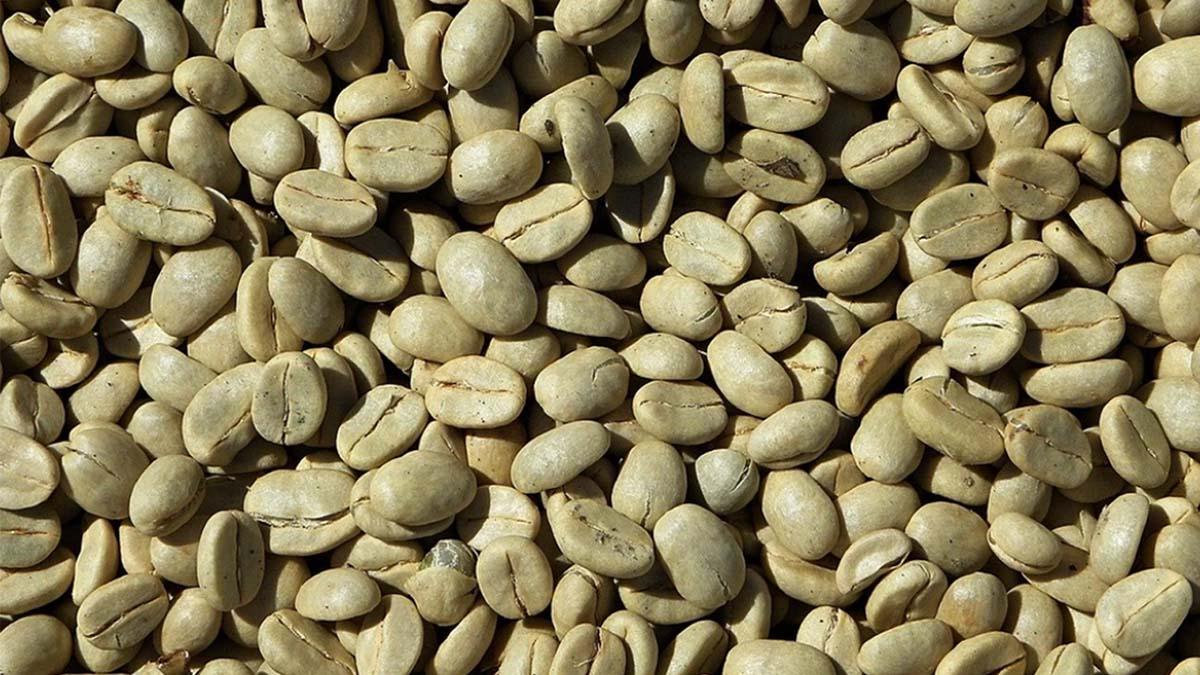 ערביקה - רק קפה
