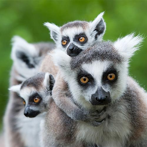 מדגסקר - האי שאין דומה לו | יום ב׳, 25.6.18 | מרצה: ד״ר רוני רדו