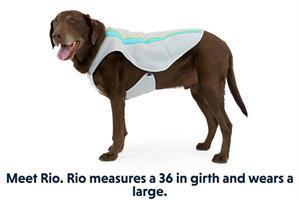 ווסט קירור חדשני לכלב SWAMP COOLER