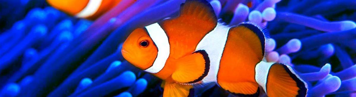 מזון לדגים - המחסן - מוצרים לבעלי חיים