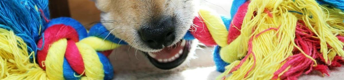 צעצועים ומשחקים לכלבים - המחסן - מוצרים לבעלי חיים