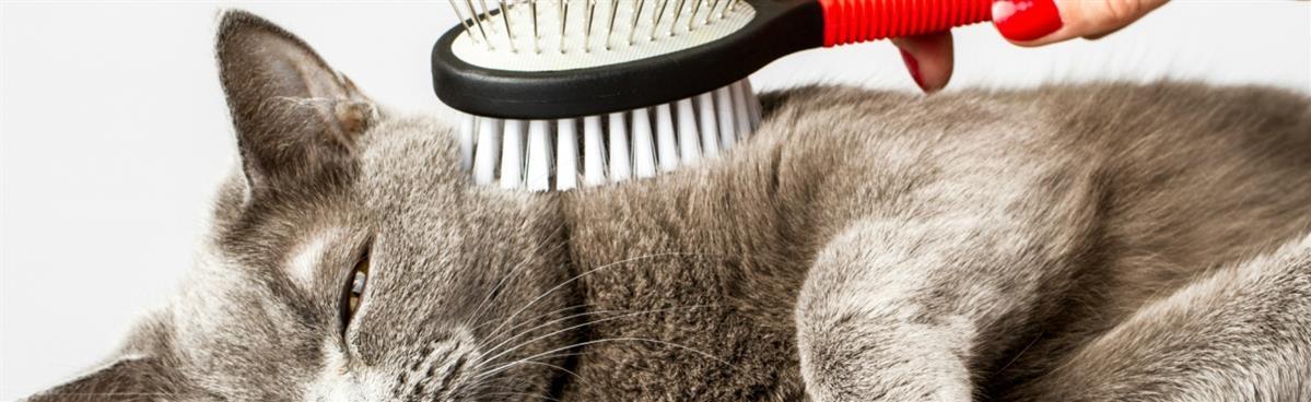 מברשות מסרקים וקוצצי ציפורניים לחתולים - המחסן - מוצרים לבעלי חיים