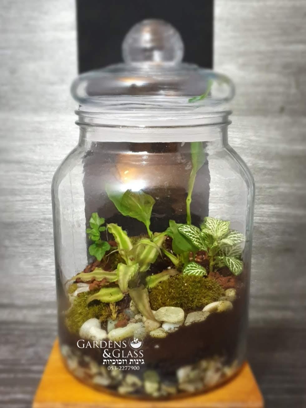 צנצנת צמחים