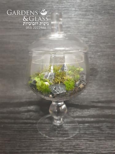 טרריום כוס על רגל