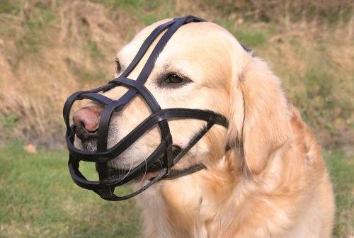 מחסום פה מעור לכלב XL