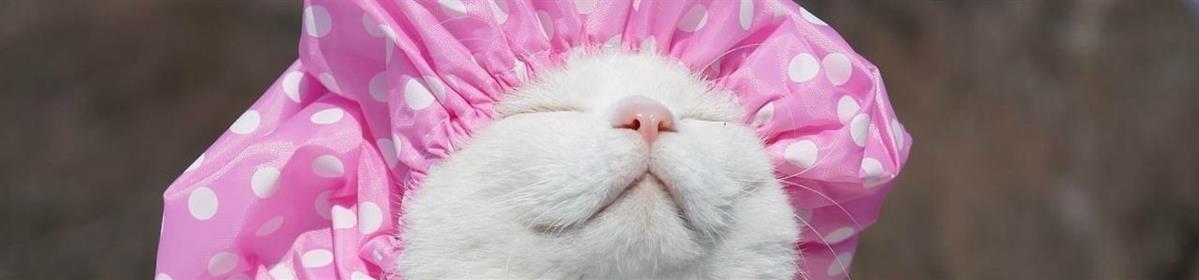 מוצרי טיפוח לחתולים וניקיון - המחסן - מוצרים לבעלי חיים