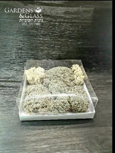 עוגת דיר מוס