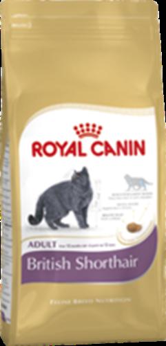 רויאל קנין  חתול בריטי 4 קילו