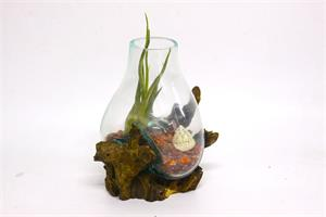 """טרריום ואזה בגובה 20 ס""""מ על גזע עץ עם צמח אוויר"""