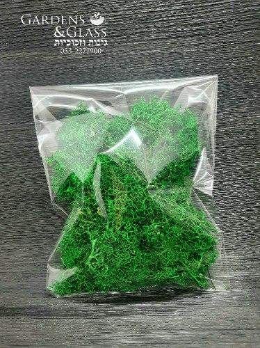 מוס ירוק ליצירה .