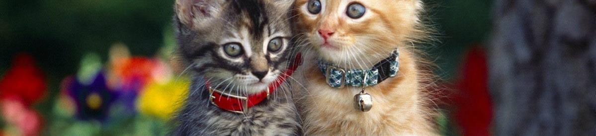 קולרים לחתולים - המחסן - מוצרים לבעלי חיים