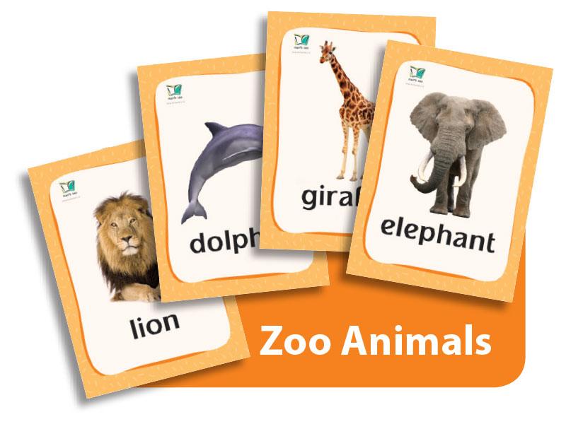קטגוריה – חיות בר (כרטיסי הברקה)| Zoo Animals Flashcards