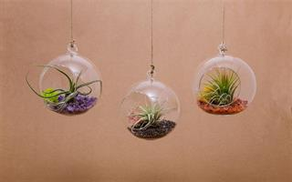 """קומבינציית 3 מוביילים 12 ס""""מ וצמחים +שפריצר מתנה"""