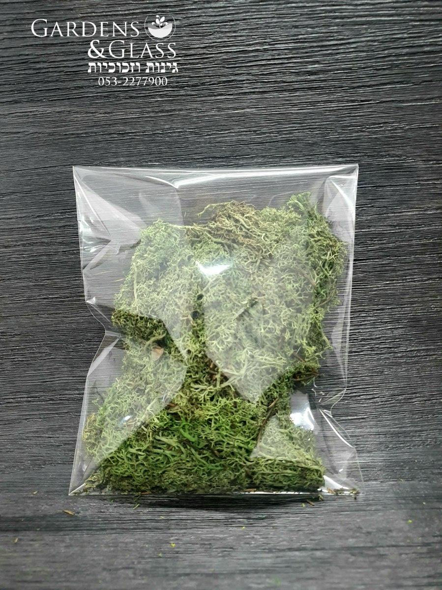 מוס ליצירה ירוק זית