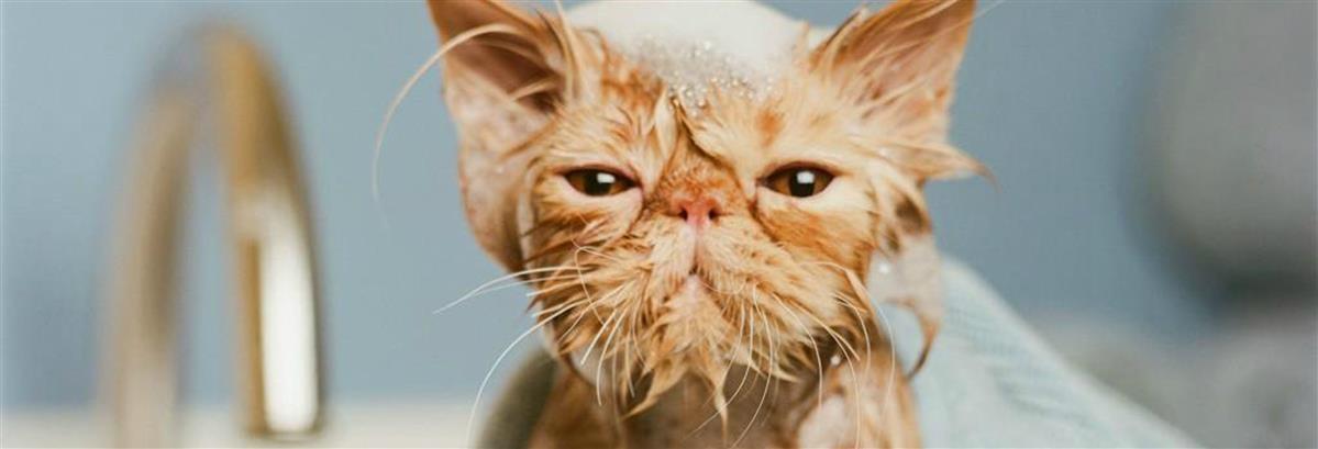 שמפו ובישום לחתולים - המחסן - מוצרים לבעלי חיים