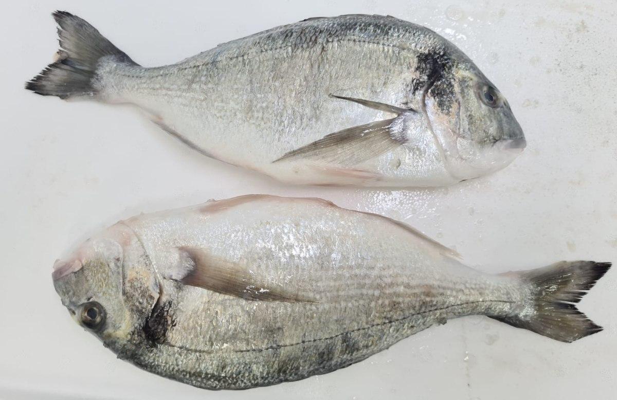 דניס  - דג שלם