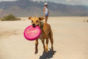 פריזבי לכלב CAMP FLYER